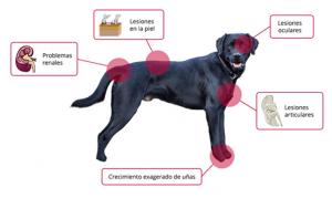 Cómo prevenir la leishmaniosis